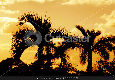 Orange Palm Silhouettes stock photo, Orange palm silhouettes. by Chris Hill