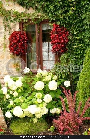 Windows framed by green ivy and red flowers stock photo, Antique windows framed with ivy and red flowers with white and pink flowers in foreground by Wes Shepherd