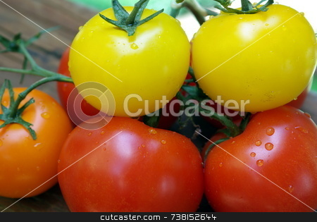 Red, Orange and Yellow Heirloom Tomatoes stock photo, Heirloom Tomatoes that come in amny unusual colors. by Lynn Bendickson