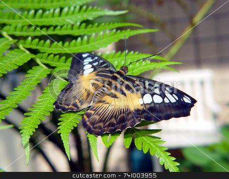 Butterfly stock photo, Butterfly on fern at a butterfly sanctuary by Jack Schiffer