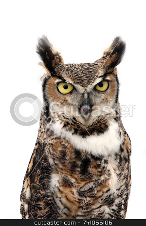 Eagle owl stock photo, Eagle Owl looking threatening. Isolated on white. by Paul Phillips