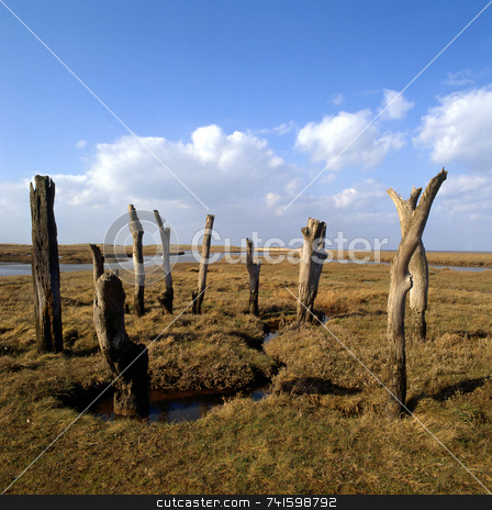Tree Circle stock photo, Circle of dead trees exposed on flat fenland by Paul Phillips