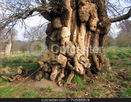 Scary Tree stock photo, Strange shapes formed in tree bark by Paul Phillips
