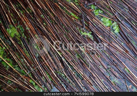 Broken Reeds stock photo, Broken reeds collected in a corner of river by Paul Phillips