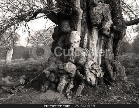 Strange shapes stock photo, Strange shapes formed in tree bark by Paul Phillips