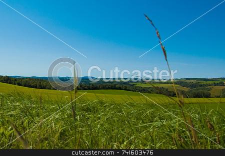 Herbs in the field stock photo, Herbs in a field in easterns township by Jean Larue-Frechette
