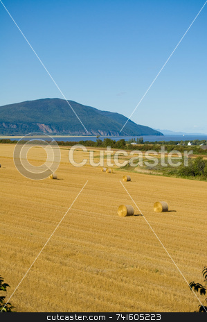 Harvest Time In The Field stock photo, A field on Orlean Island during harvest time autumn. by Jean Larue-Frechette