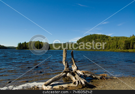 Tree Stump On Lake Shore stock photo, Tree stump on lake shore at Orford Park by Jean Larue-Frechette