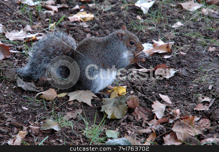 Chipmunk in central park stock photo,  by Aivlis Rios
