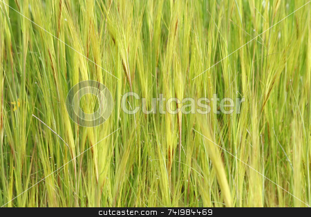 Patterned Weeds stock photo, A patterned background of green weeds during springtime by Georgios Alexandris