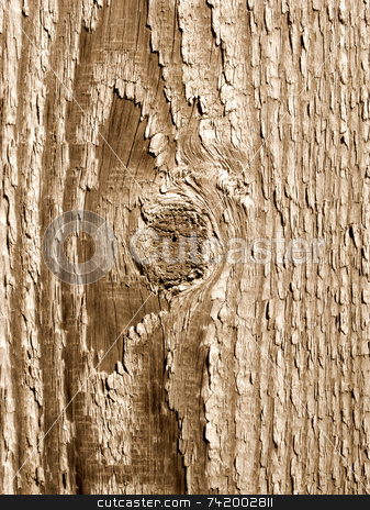 Wood knot and texture close up. stock photo, Wood knot and texture close up. by Stephen Rees
