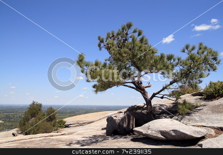 Pine tree view stock photo, Natures view on top of Stone mountain Georgia by Jack Schiffer