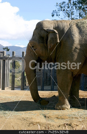 Elephant 4687 stock photo, Elephants (Elephantidae) are a family in the order Proboscidea in the class Mammalia. by Henrik Lehnerer