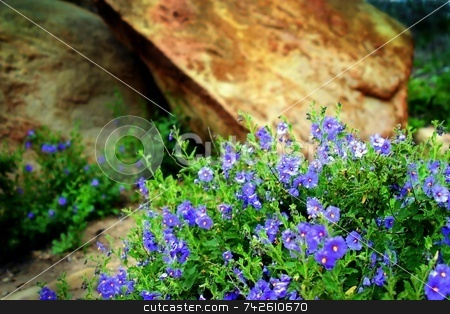 Wildflowers 6351 stock photo, Wildflowers in the Santa Susana Mountains by Henrik Lehnerer