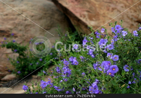 Wildflowers 6352 stock photo, Wildflowers in the Santa Susana Mountains by Henrik Lehnerer