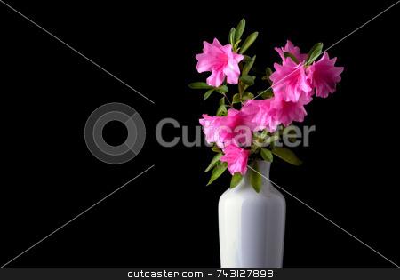 Pink azaleas in a white vase stock photo, Fresh cut pink azaleas in a white vase by Vince Clements