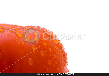 Fresh red tomato stock photo, Macro of a fresh red tomato on a white background by Vince Clements