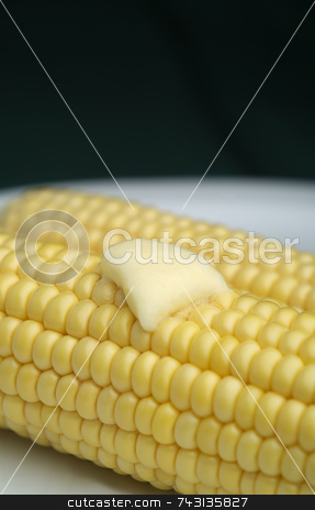Corn on the cobb with melted butter stock photo, Corn on the cobb with melted butter on a white plate and bacl background by Vince Clements