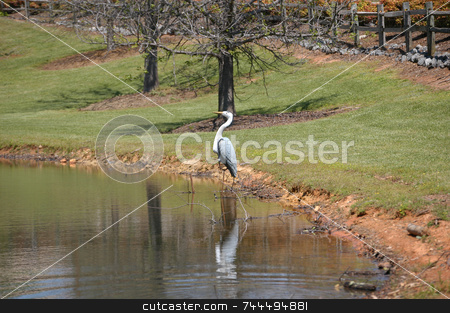 Bird on the pond stock photo, Bird on the side of lake in a southern state by Tim Markley