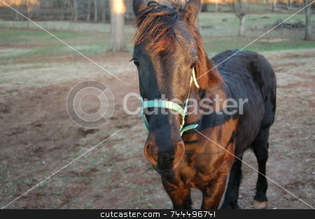 Young horse stock photo, A rural farm seen at night time by Tim Markley