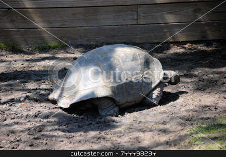 Old turtle shell stock photo, An old turtle shell seen up close by Tim Markley