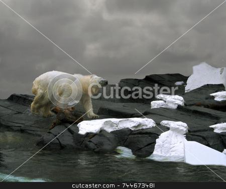 Polar Bear stock photo,  by Greg Peterson