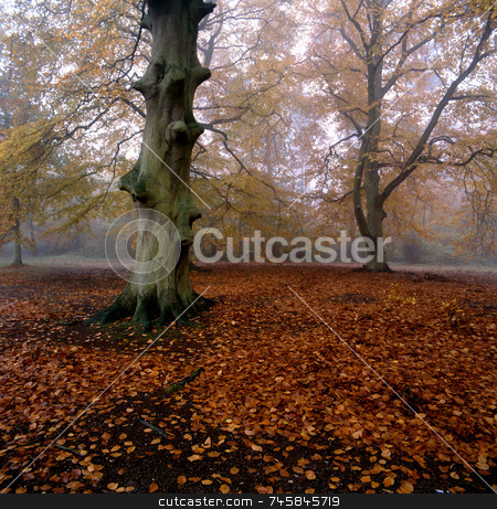 Fallen stock photo, Fallen leaves on a forest floor by Paul Phillips
