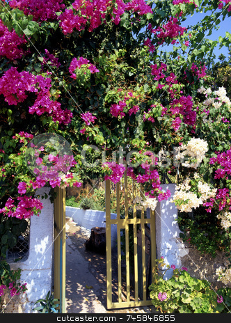 Bougainvillea stock photo, Bougainvillea blooms around a garden gate in greece by Paul Phillips