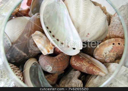 Seashell stock photo, Different types of seashells in a glass bowl by Jonas Marcos San Luis