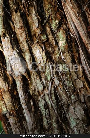 Tree bark stock photo,  by Aivlis Rios