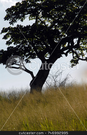 Tree stock photo,  by Aivlis Rios