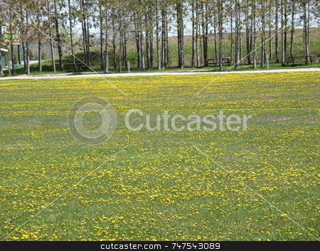 A Carpet of Dandelions stock photo, Image of a carpet of dandelions in a field surrounded by trees. by Ray Carpenter
