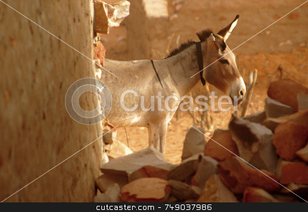 Donkey stock photo, Donkey in the Sahara desert by Kobby Dagan