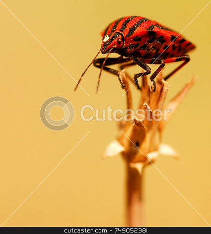 Bug stock photo, Close up on bug in the field by Kobby Dagan