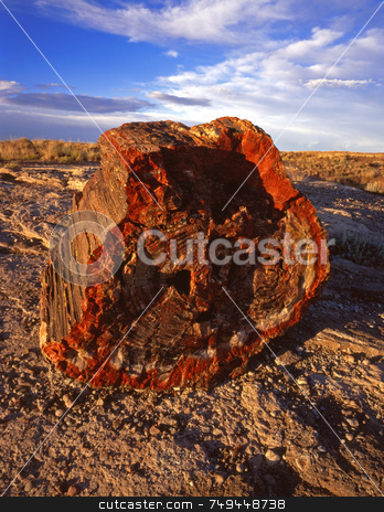 Petrified Rock 1 stock photo, Part of a petrified tree in Petrified Forest National Park, Arizona. by Mike Norton