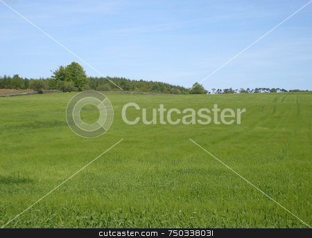 Field in countryside stock photo, Field in countryside, north yorkshire moors national park, England. by Martin Crowdy