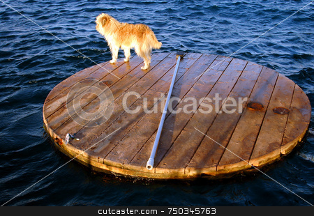 Lost stock photo, Dog on wood boart in red sea eilat by Kobby Dagan