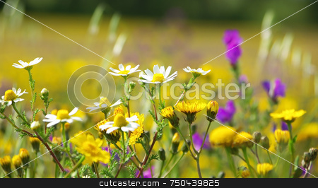 Wild flowers. stock photo, Wild flowers in the field of Portugal. by Inacio Pires