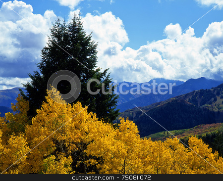 Alpine Loop Aspens stock photo, Aspen and evergreen trees in the Wasatch-Cache National Forest, Utah. by Mike Norton