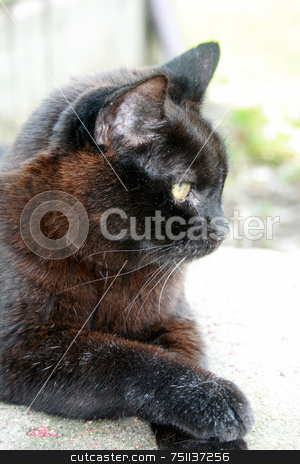 Elderly Cat, Relaxing stock photo, A 20 year old cat, relaxing by Tom and Beth Pulsipher