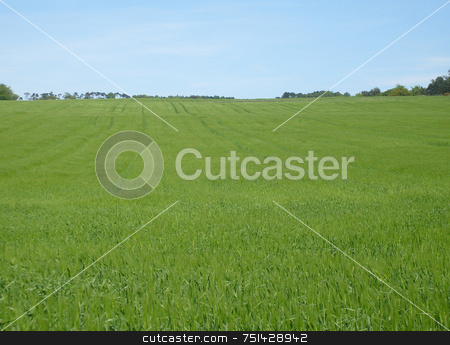 Rural landscape stock photo, Grass waving in wind in rural countryside landscape of North Yorkshire Moors National Park, England. by Martin Crowdy