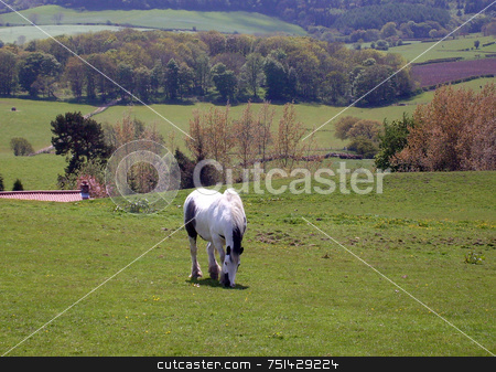 Rural landscape stock photo, Horse standing in rural countryside landscape of North Yorkshire Moors National Park, England. by Martin Crowdy