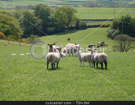 Rural landscape stock photo, Sheep grazing in rural countryside landscape of North Yorkshire Moors National Park, England. by Martin Crowdy