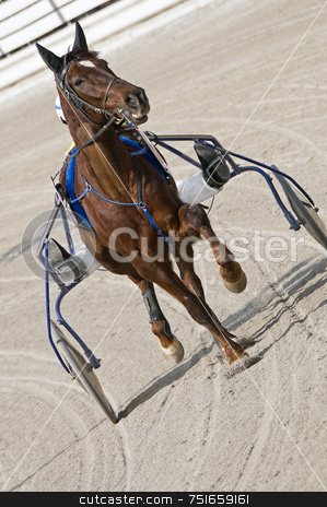 Harness racing stock photo, Trot horse riding in a race track by Massimiliano Leban