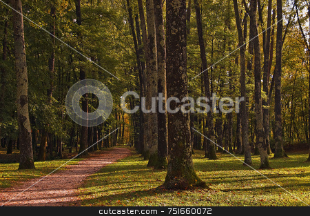 Path in the wood stock photo, Long path in a high trunks wood by Massimiliano Leban