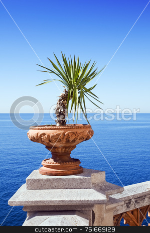 Sea view stock photo, View of sea from a terrace with plant by Massimiliano Leban