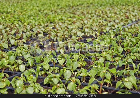 Small flower plants stock photo, Close-up of small flower plants in a greenhouse by Massimiliano Leban