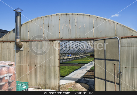 Greenhouse stock photo, Plants cultivation in a greenhouse by Massimiliano Leban