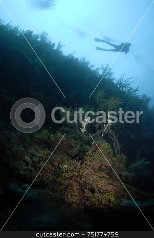 Scuba Diver in Background stock photo, Scuba Diver Overhead by A Cotton Photo