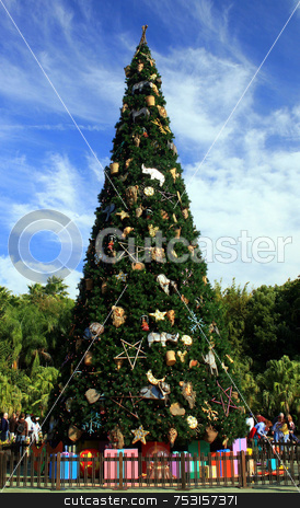 Christmas Tree stock photo, A very big christmas tree in Florida. by Lucy Clark